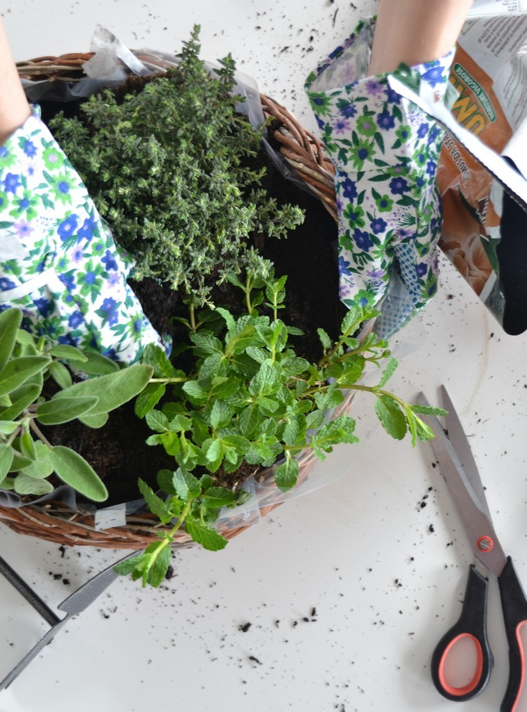 DIY Herb Basket - terra2